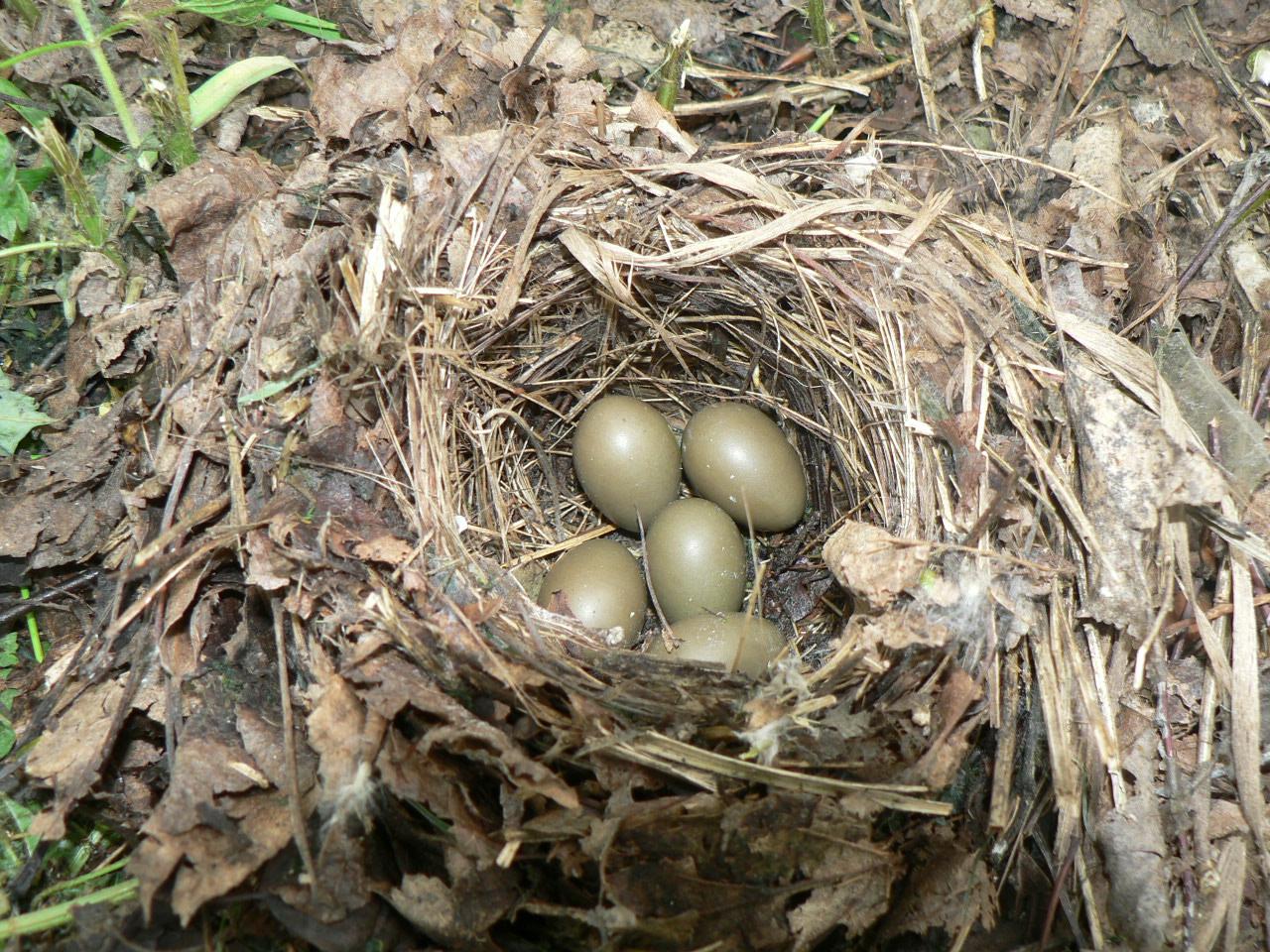 Гнездо для соловья